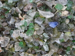 Glass Mulch_1