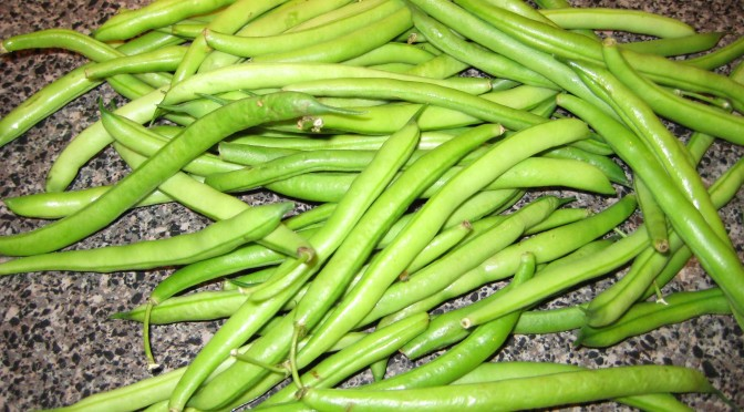 Green Beans The How Do Gardener