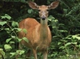 Keep Deer From Devouring Your Yard and Garden