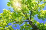 Sunlight through Tree_2