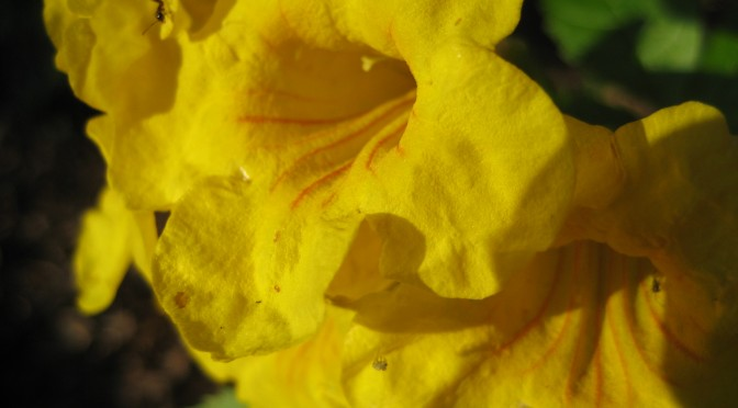 Flowers_April 2 028