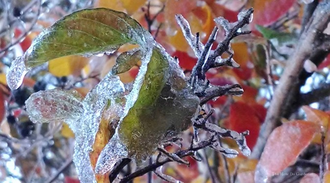 Last Frost Date: What it Means to Your Garden