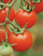 Tomato Time Tips