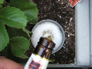 Pill Bug Control In Garden Garden Ftempo