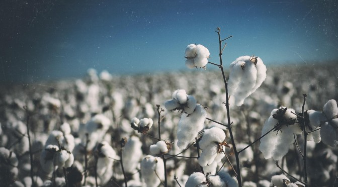 Soaring Cotton Prices