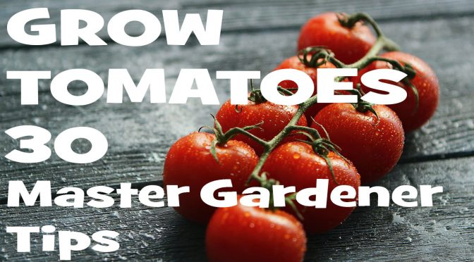 How to Grow Tomatoes: 30 Master Gardener Tips